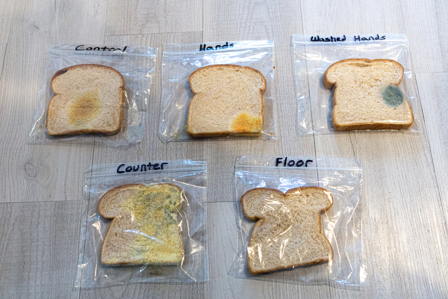 Gross Science Experiments Moldy Bread