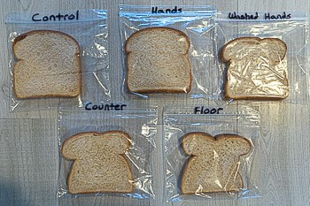 Bread Mold Science Experiment